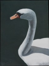 """Swan"" a realistic oil painting of the National Bird of Denmark - D: 30x40 cm"