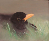 """Blackbird"" Hiding in the grass, - Oil painting D: 60x50 cm"