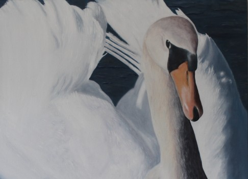 """The National Bird of Denmark, the Swan"" - Realistic oil painting D: 92x85 cm"