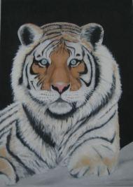 Tigar-tiger